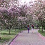 10 мест для фотосессии в цветущих садах