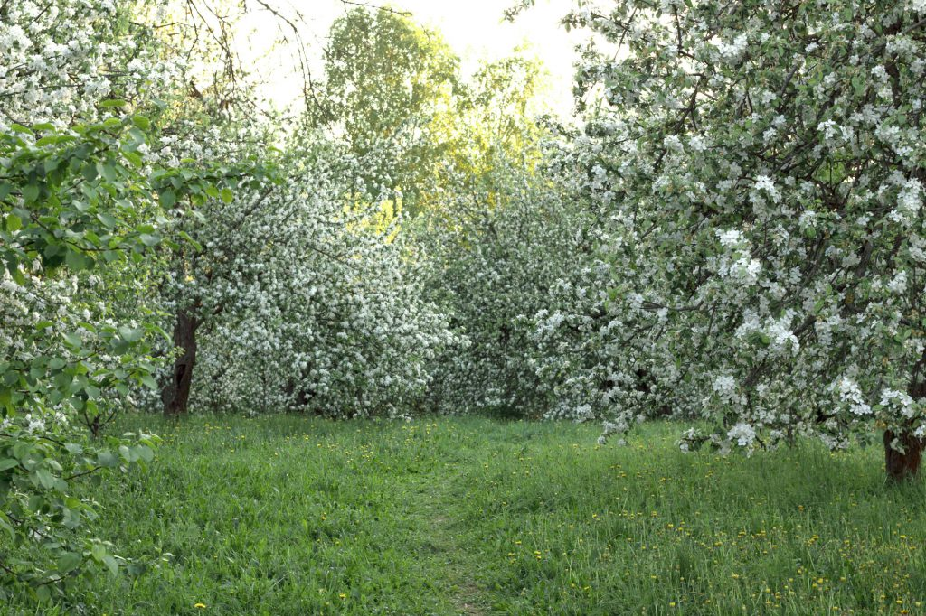 , 10 мест для фотосессии в цветущих садах